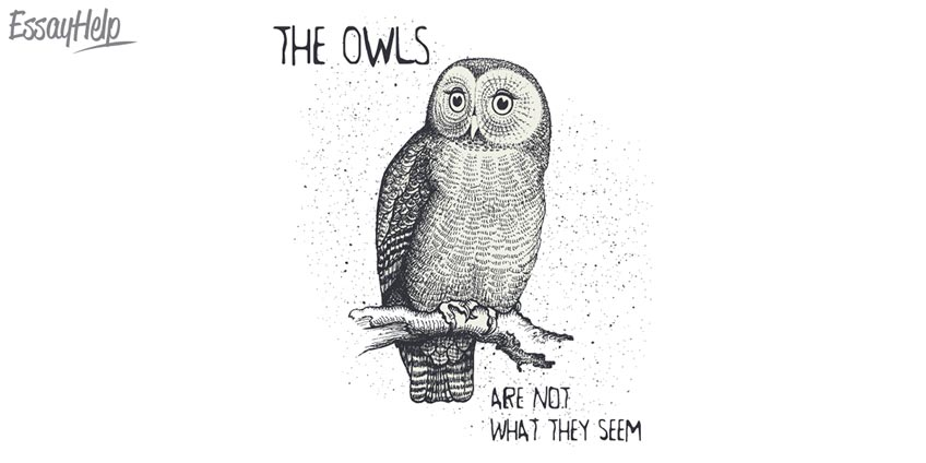 'Owls Are Not What They Seem'